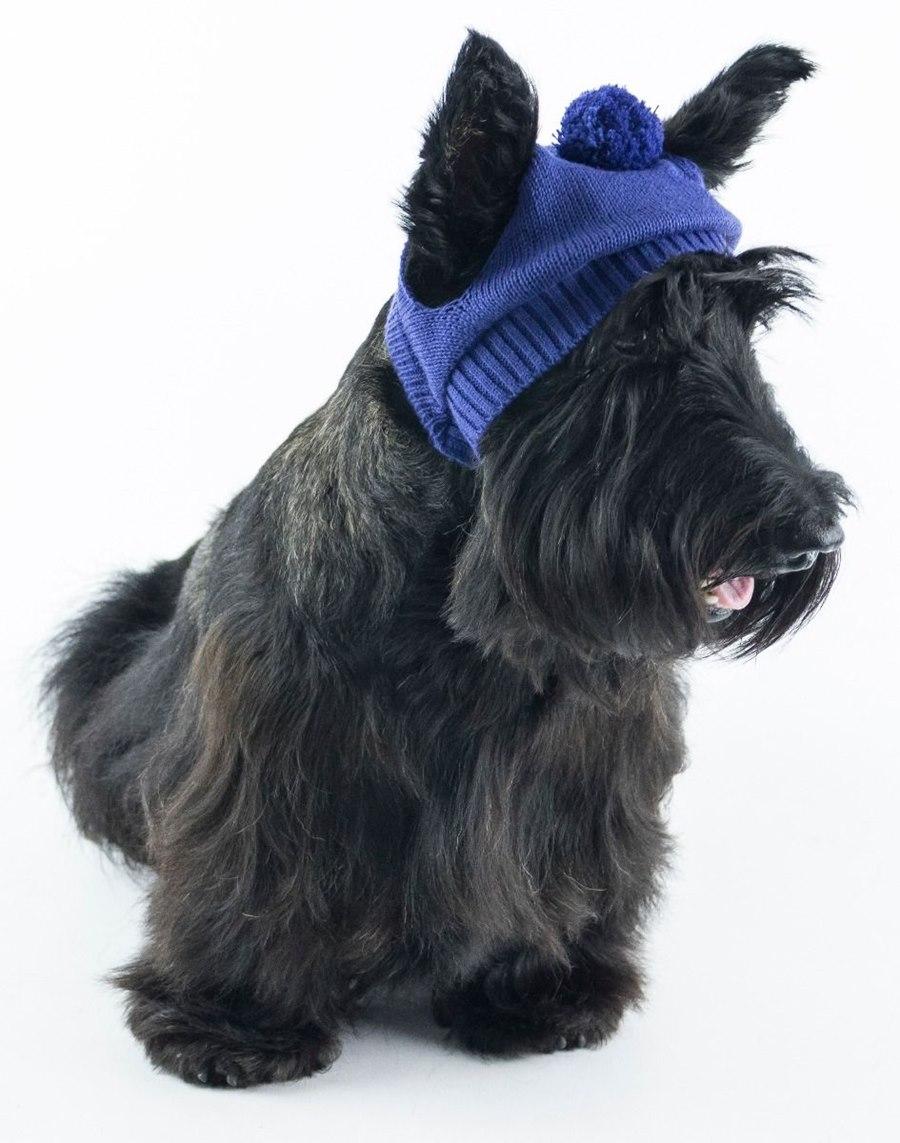 Touca para Cachorro Tricot - Allie Pet - Bicho Web f05fe23c761